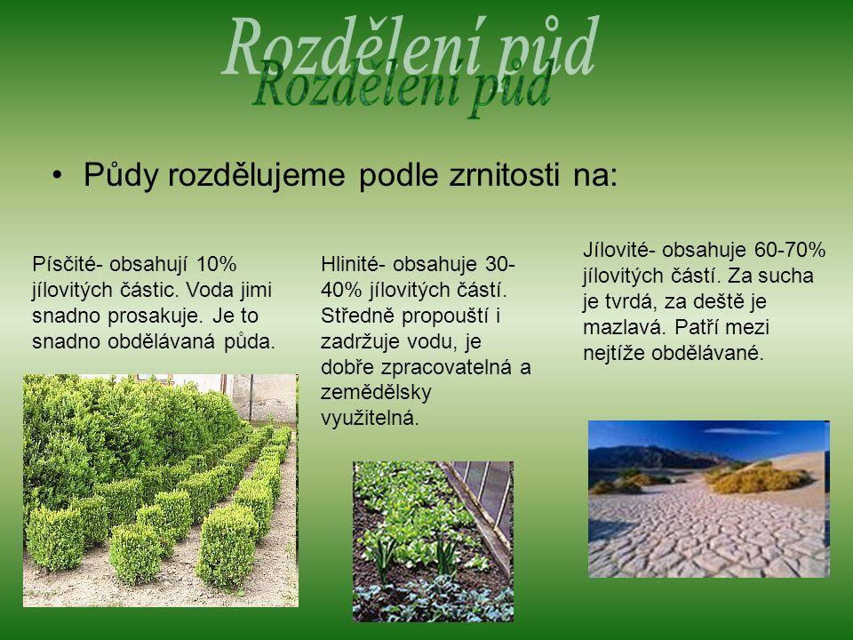 Rozdělení půd Půdy rozdělujeme podle zrnitosti na: