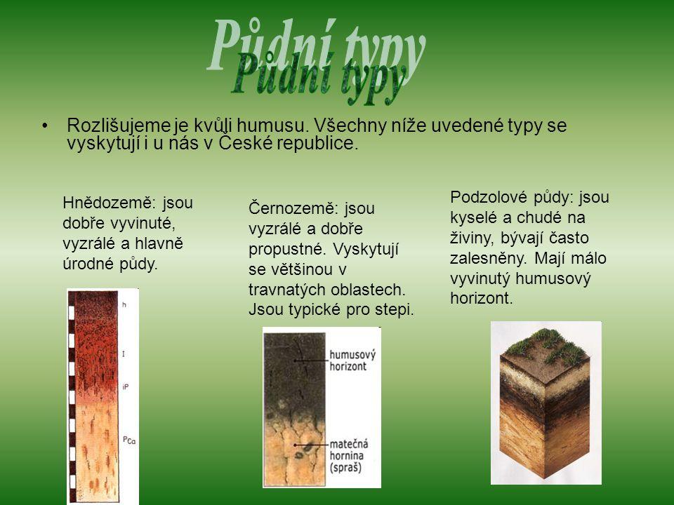Půdní typy Rozlišujeme je kvůli humusu. Všechny níže uvedené typy se vyskytují i u nás v České republice.