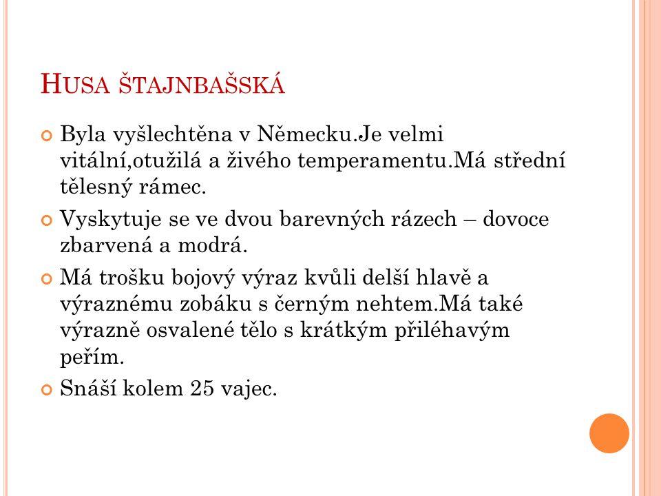 Husa štajnbašská Byla vyšlechtěna v Německu.Je velmi vitální,otužilá a živého temperamentu.Má střední tělesný rámec.