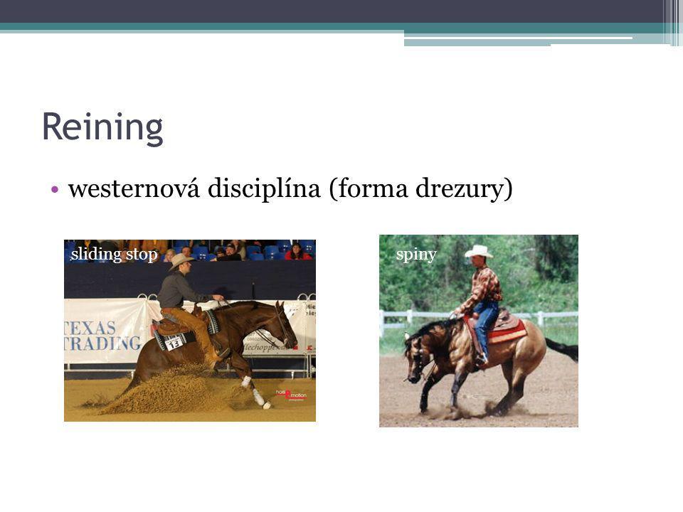 Reining westernová disciplína (forma drezury) sliding stop
