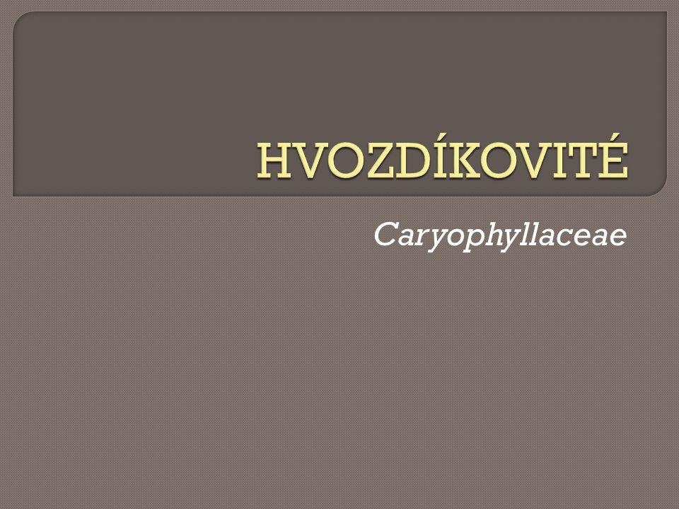 HVOZDÍKOVITÉ Caryophyllaceae