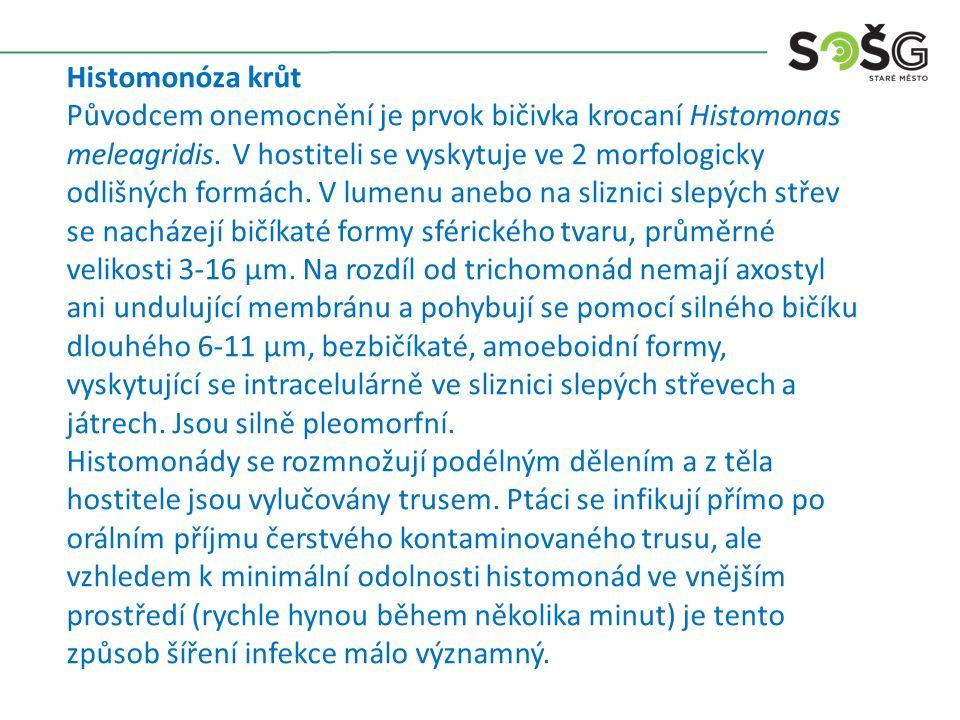 Histomonóza krůt