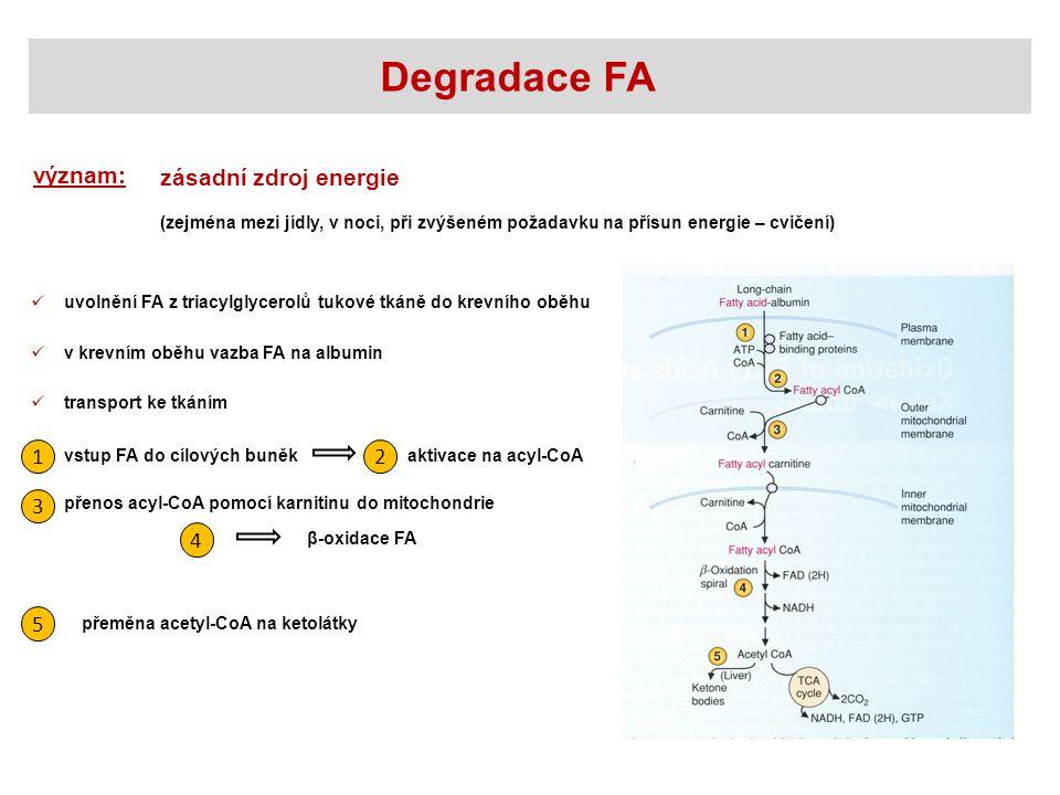 Degradace FA význam: zásadní zdroj energie 1 2 3 4 5
