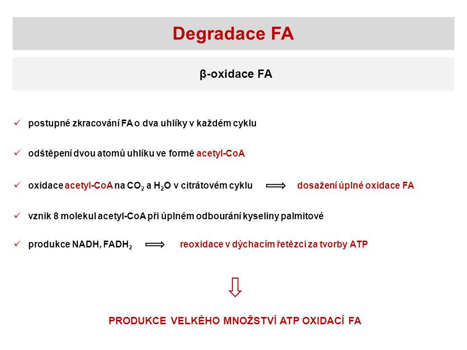 Degradace FA β-oxidace FA PRODUKCE VELKÉHO MNOŽSTVÍ ATP OXIDACÍ FA