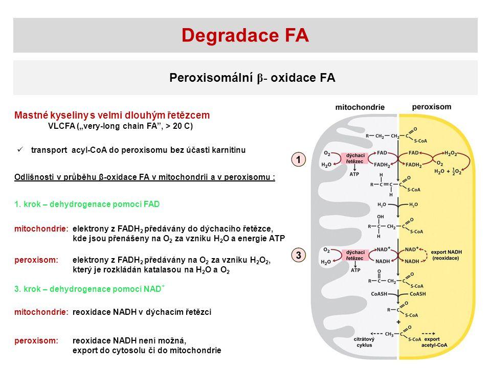 Degradace FA Peroxisomální β- oxidace FA