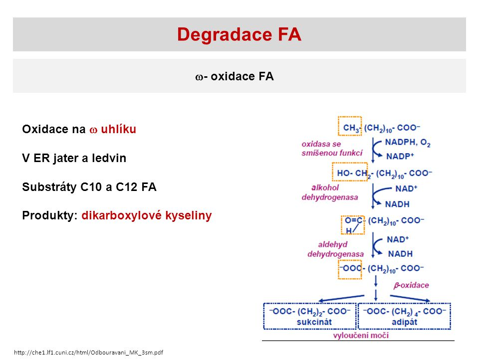 Degradace FA - oxidace FA Oxidace na  uhlíku V ER jater a ledvin