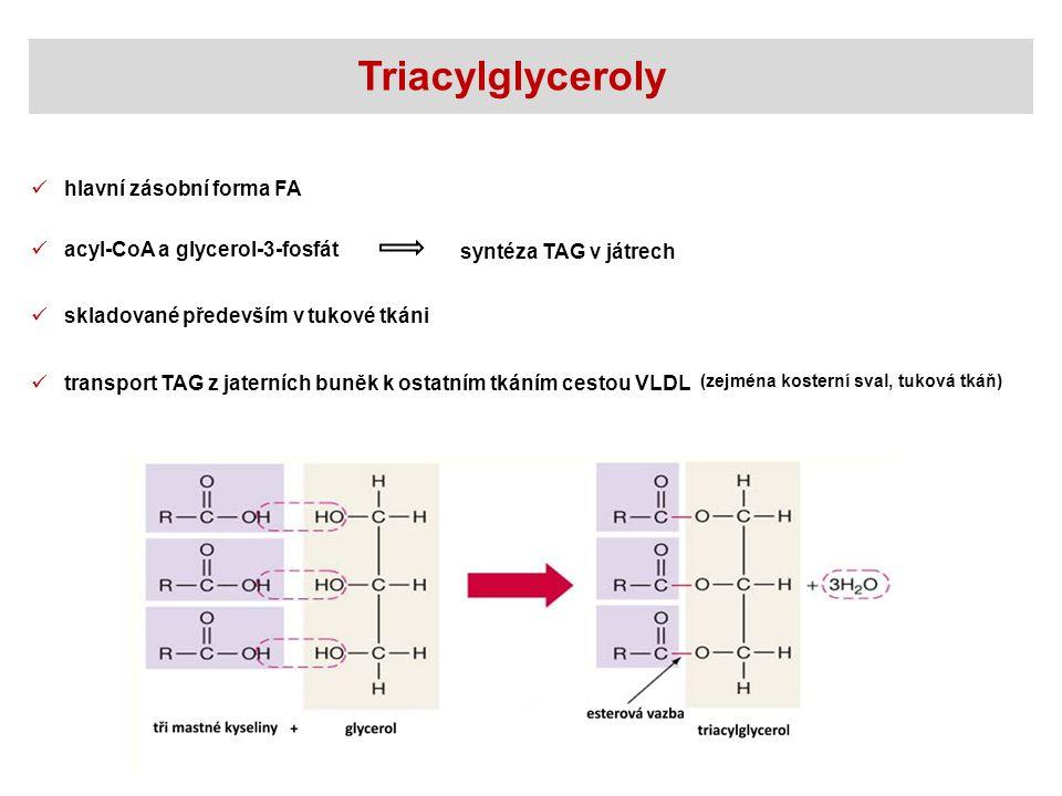 Triacylglyceroly hlavní zásobní forma FA acyl-CoA a glycerol-3-fosfát
