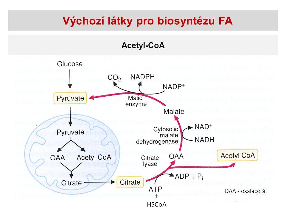 Výchozí látky pro biosyntézu FA