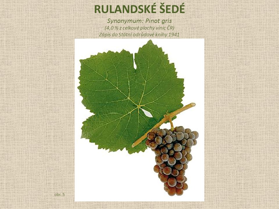 RULANDSKÉ ŠEDÉ Synonymum: Pinot gris (4,0 % z celkové plochy vinic ČR)