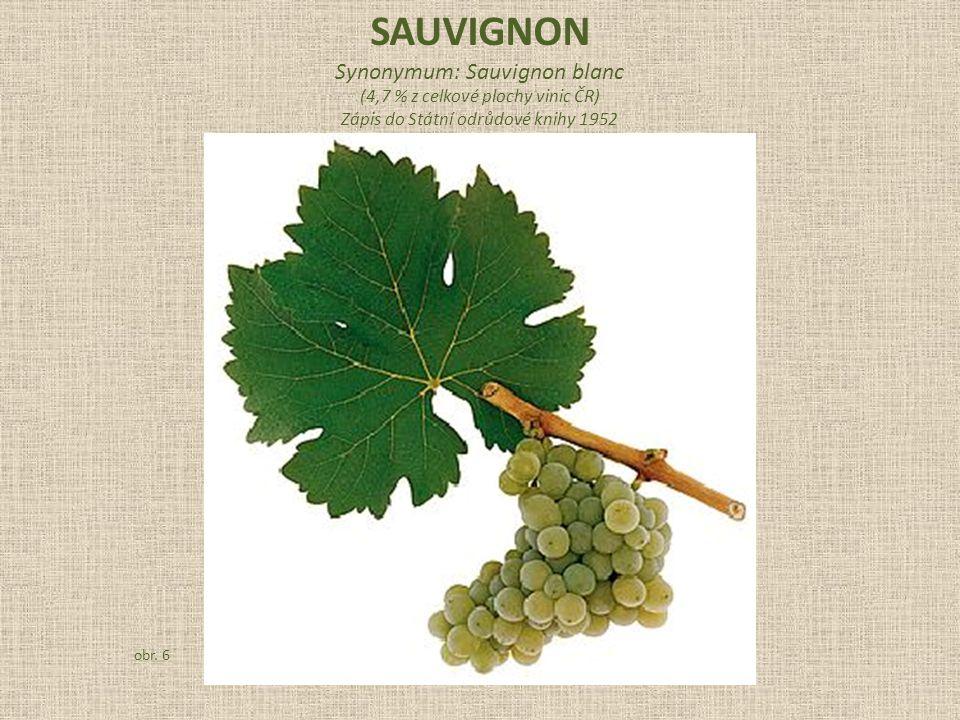 SAUVIGNON Synonymum: Sauvignon blanc (4,7 % z celkové plochy vinic ČR)