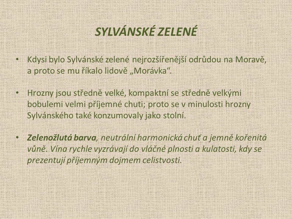"""SYLVÁNSKÉ ZELENÉ Kdysi bylo Sylvánské zelené nejrozšířenější odrůdou na Moravě, a proto se mu říkalo lidově """"Morávka ."""