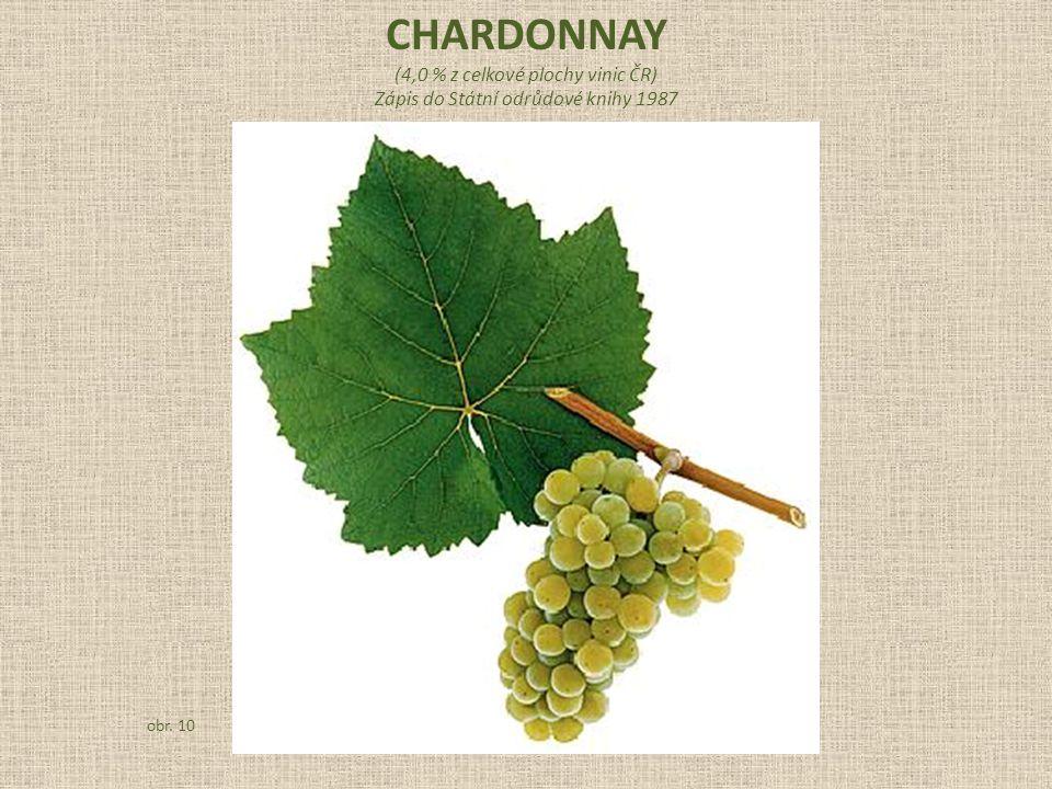 CHARDONNAY (4,0 % z celkové plochy vinic ČR)