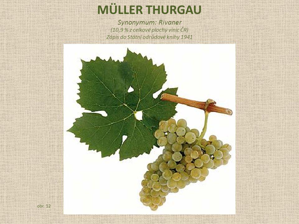 MÜLLER THURGAU Synonymum: Rivaner (10,9 % z celkové plochy vinic ČR)