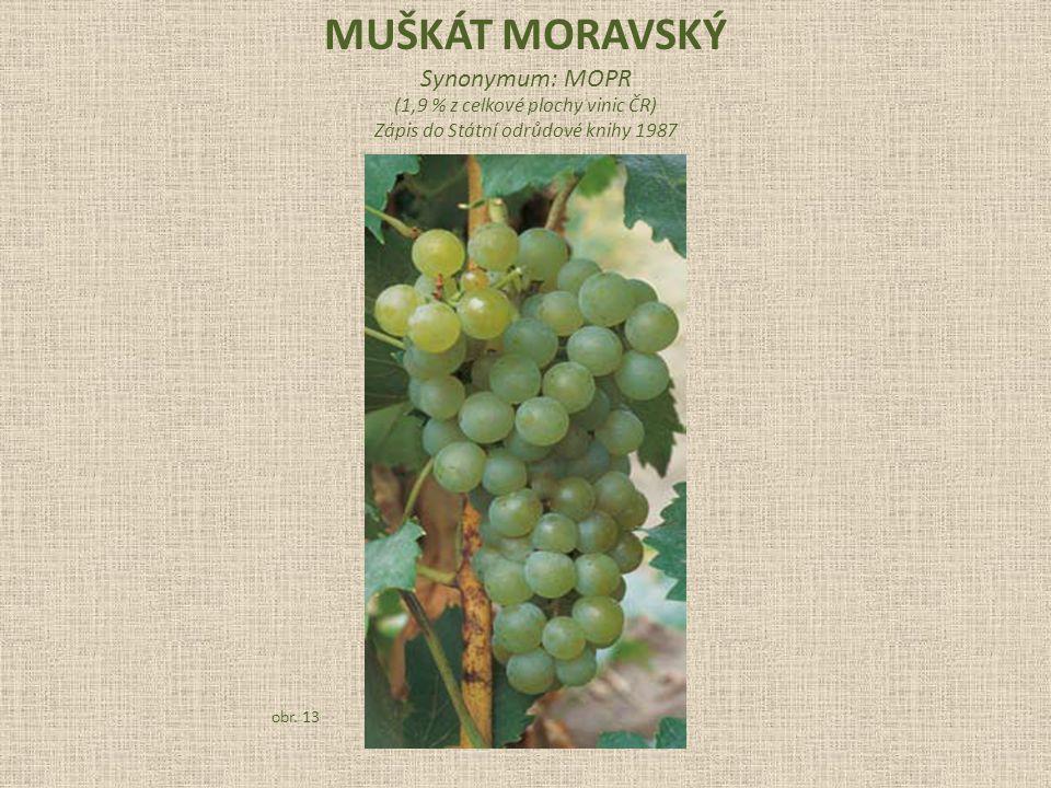 MUŠKÁT MORAVSKÝ Synonymum: MOPR (1,9 % z celkové plochy vinic ČR)