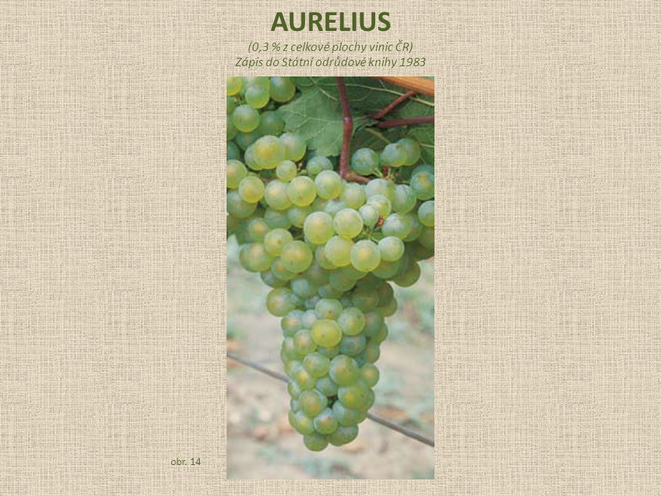 AURELIUS (0,3 % z celkové plochy vinic ČR)