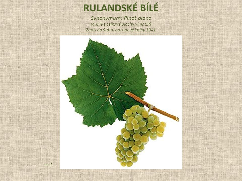rulandské bílé Synonymum: Pinot blanc
