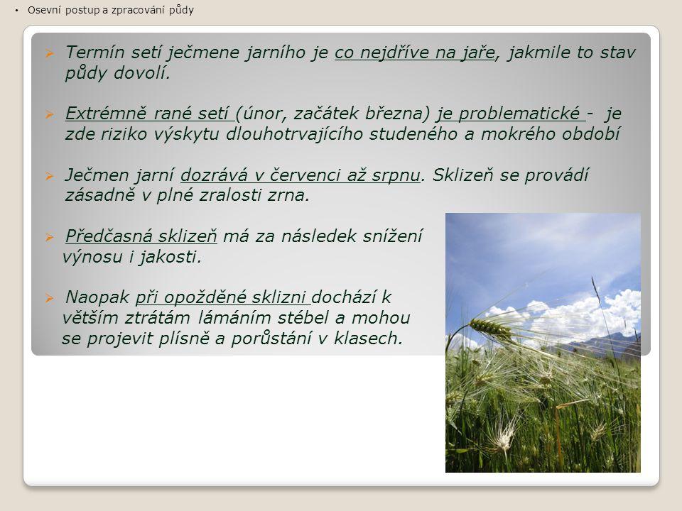 Předčasná sklizeň má za následek snížení výnosu i jakosti.