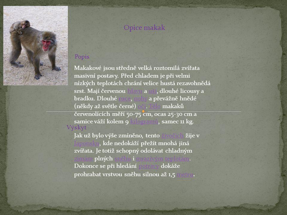 Opice makak Popis.