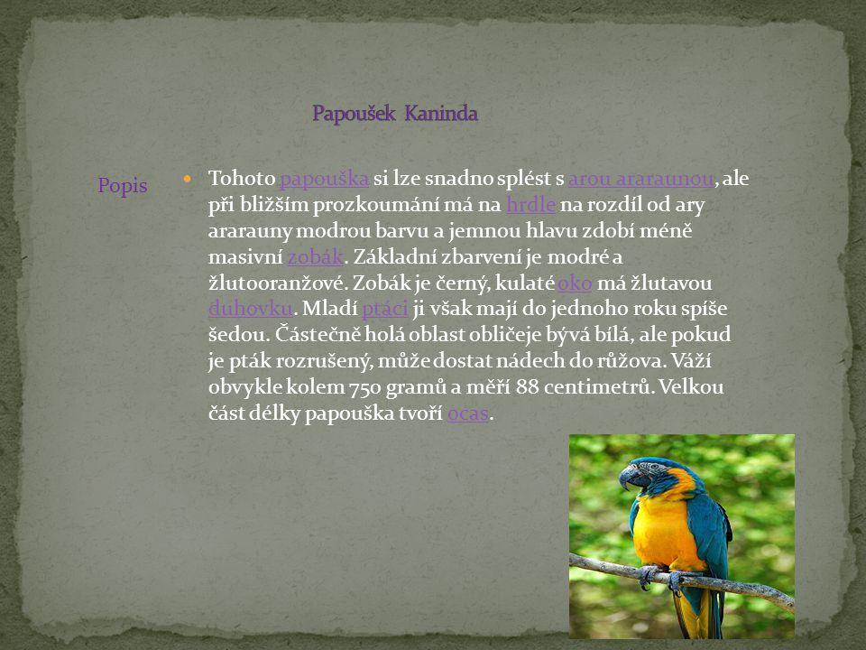 Papoušek Kaninda