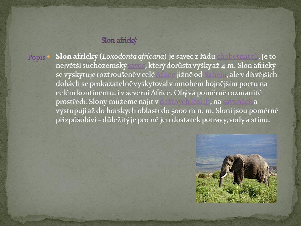 Slon africký Popis.