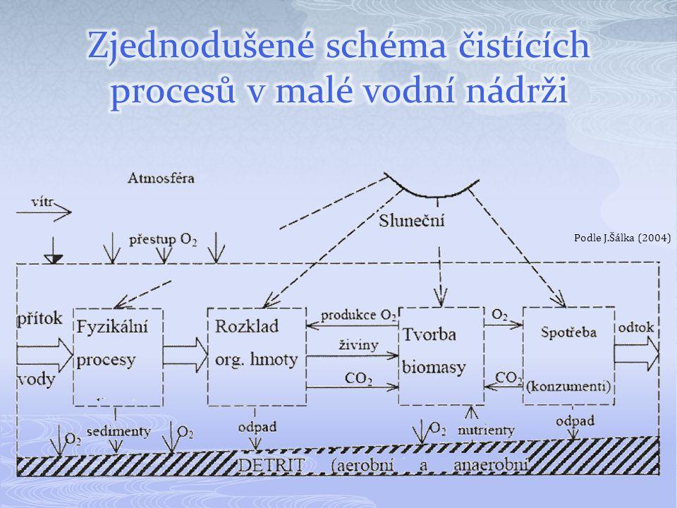 Zjednodušené schéma čistících procesů v malé vodní nádrži