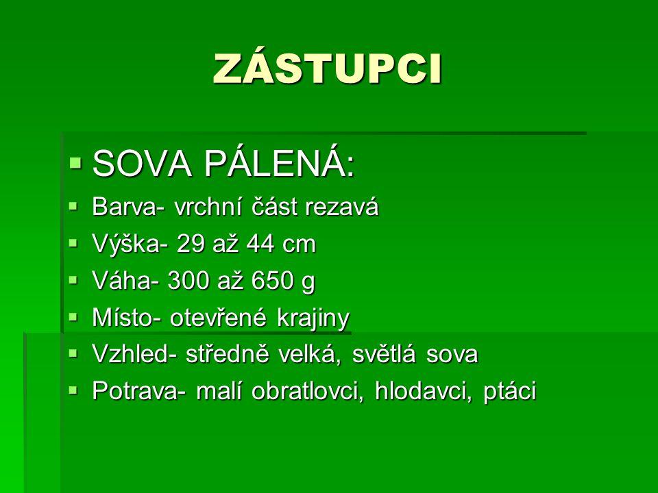 ZÁSTUPCI SOVA PÁLENÁ: Barva- vrchní část rezavá Výška- 29 až 44 cm