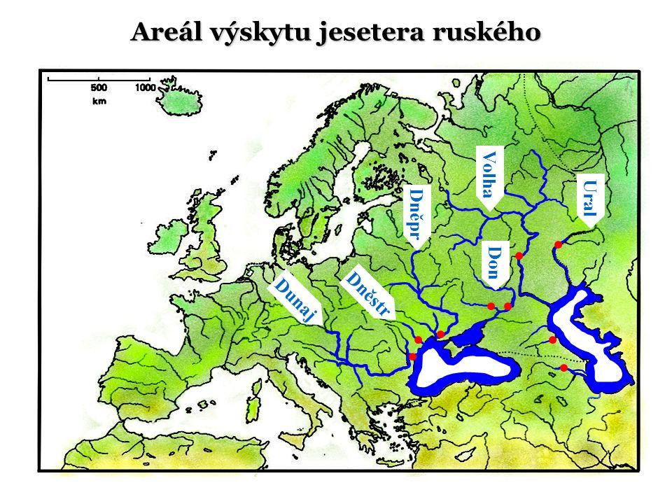 Areál výskytu jesetera ruského