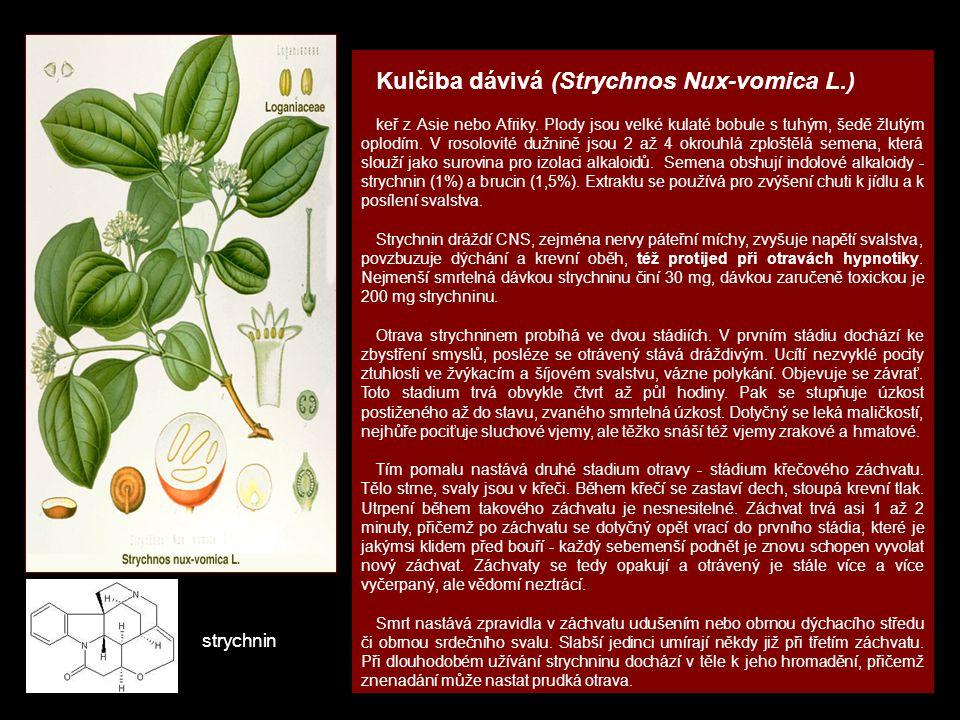 Kulčiba dávivá (Strychnos Nux-vomica L.)