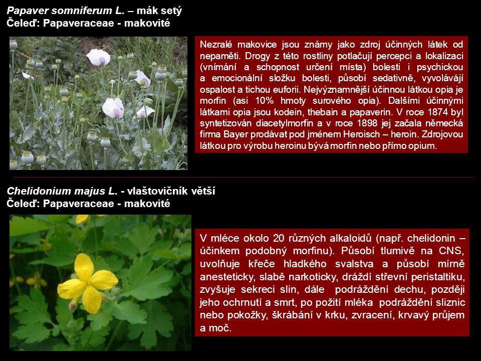 Papaver somniferum L. – mák setý Čeleď: Papaveraceae - makovité