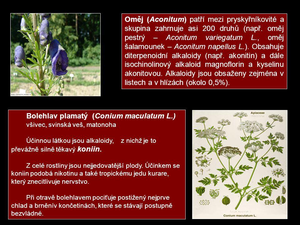 Bolehlav plamatý (Conium maculatum L.)