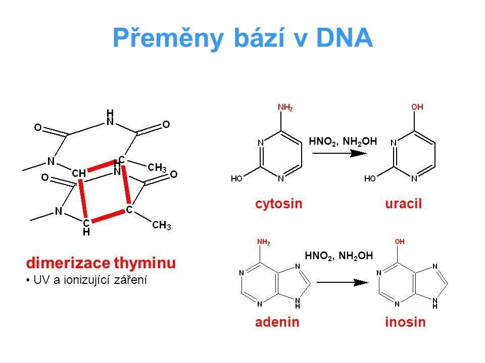 Přeměny bází v DNA dimerizace thyminu cytosin uracil adenin inosin
