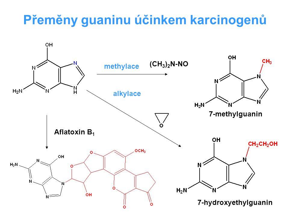 Přeměny guaninu účinkem karcinogenů