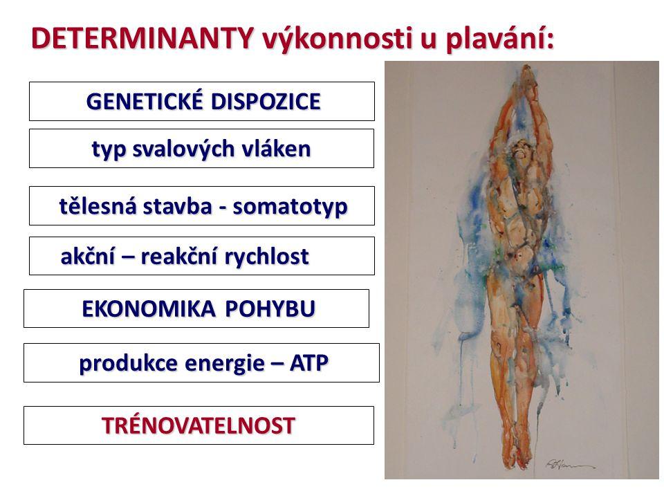 tělesná stavba - somatotyp