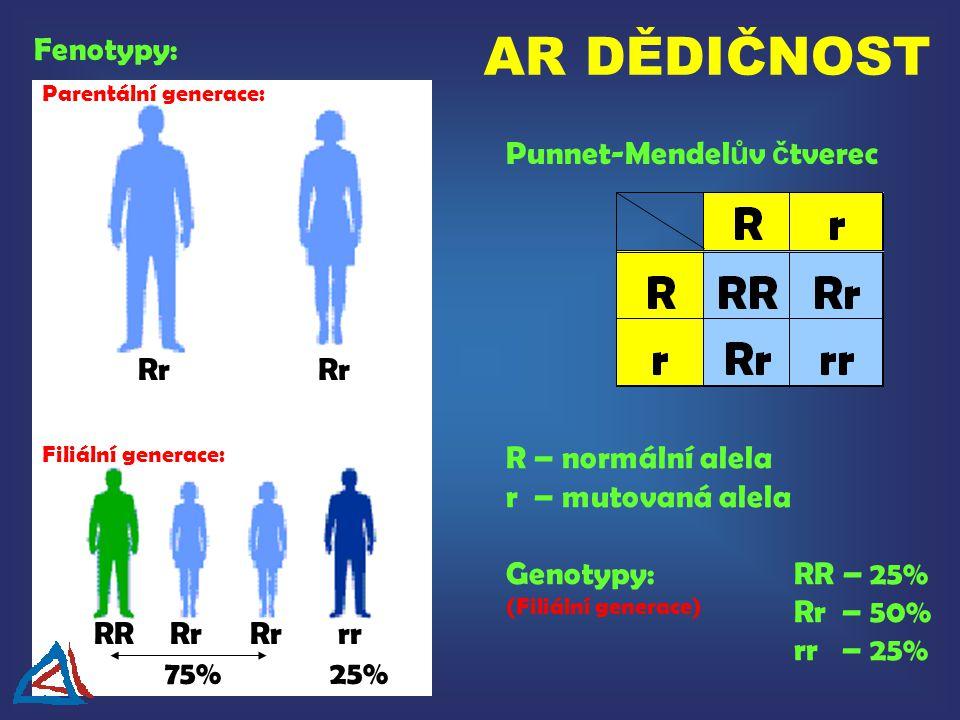 AR DĚDIČNOST Fenotypy: Punnet-Mendelův čtverec Rr Rr