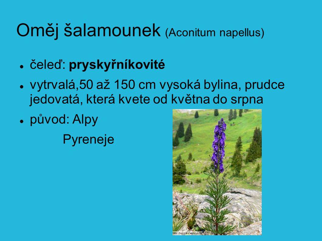 Oměj šalamounek (Aconitum napellus)