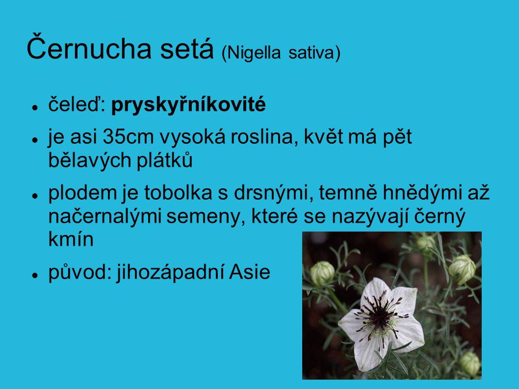 Černucha setá (Nigella sativa)
