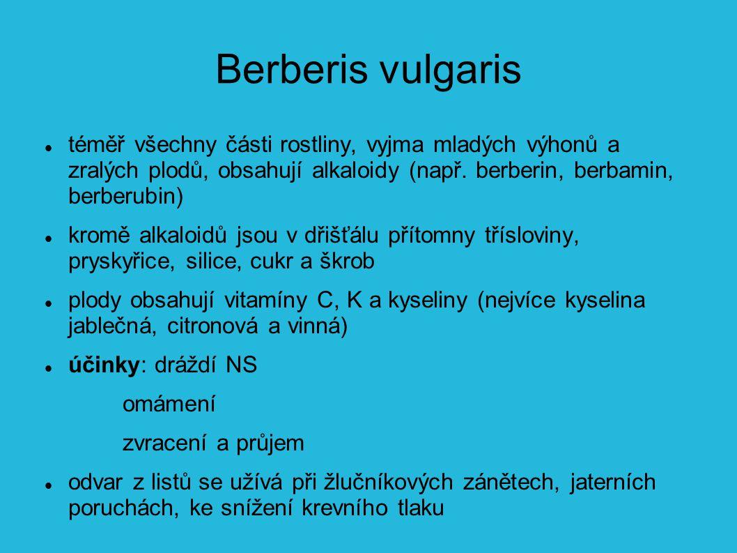 Berberis vulgaris téměř všechny části rostliny, vyjma mladých výhonů a zralých plodů, obsahují alkaloidy (např. berberin, berbamin, berberubin)