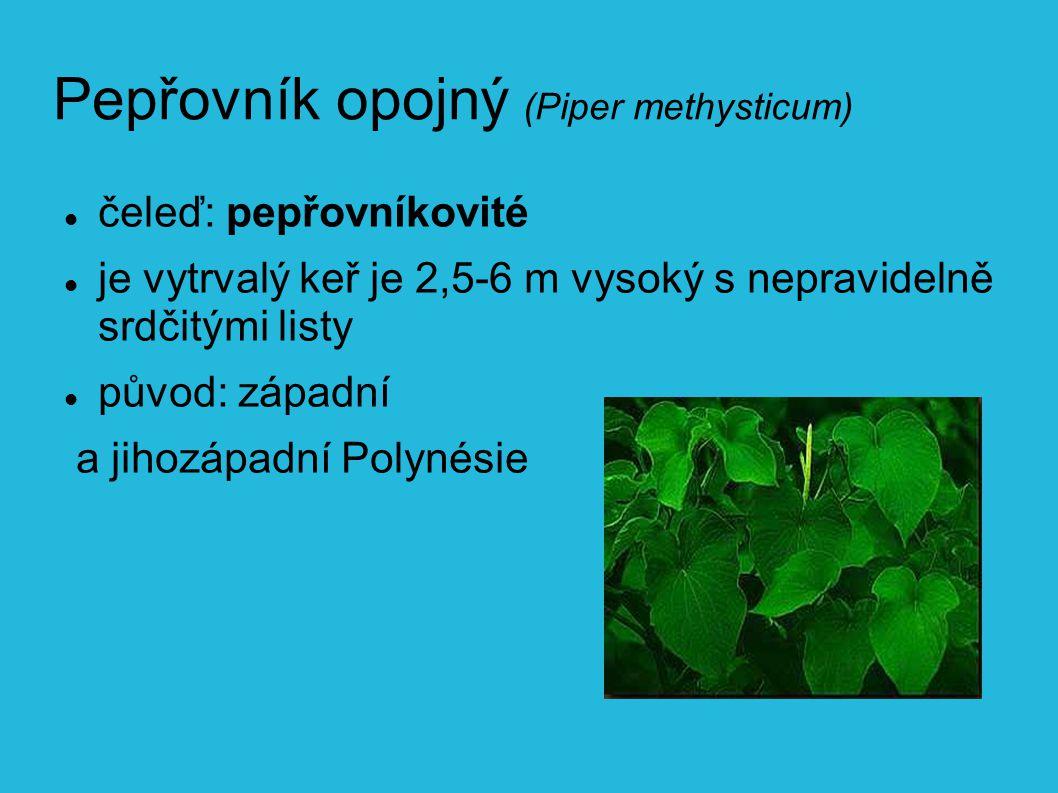 Pepřovník opojný (Piper methysticum)