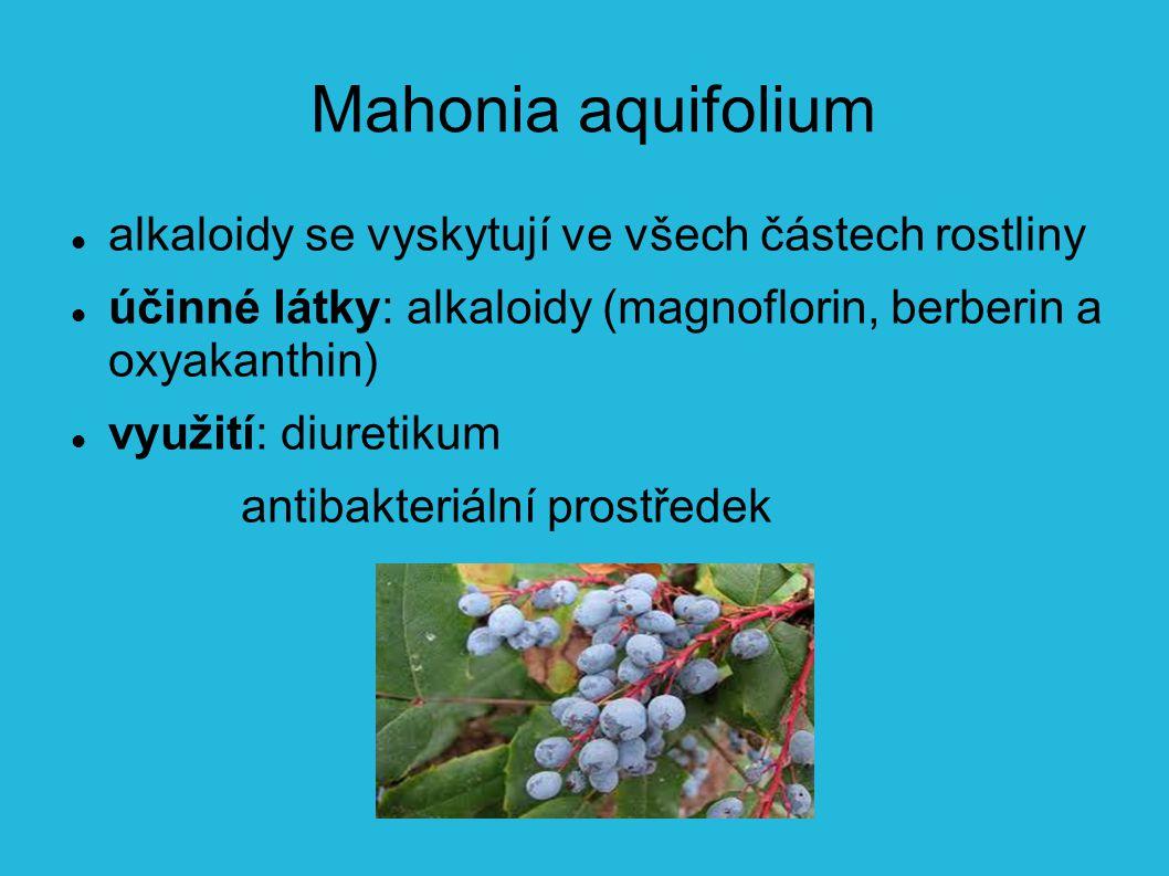 Mahonia aquifolium alkaloidy se vyskytují ve všech částech rostliny