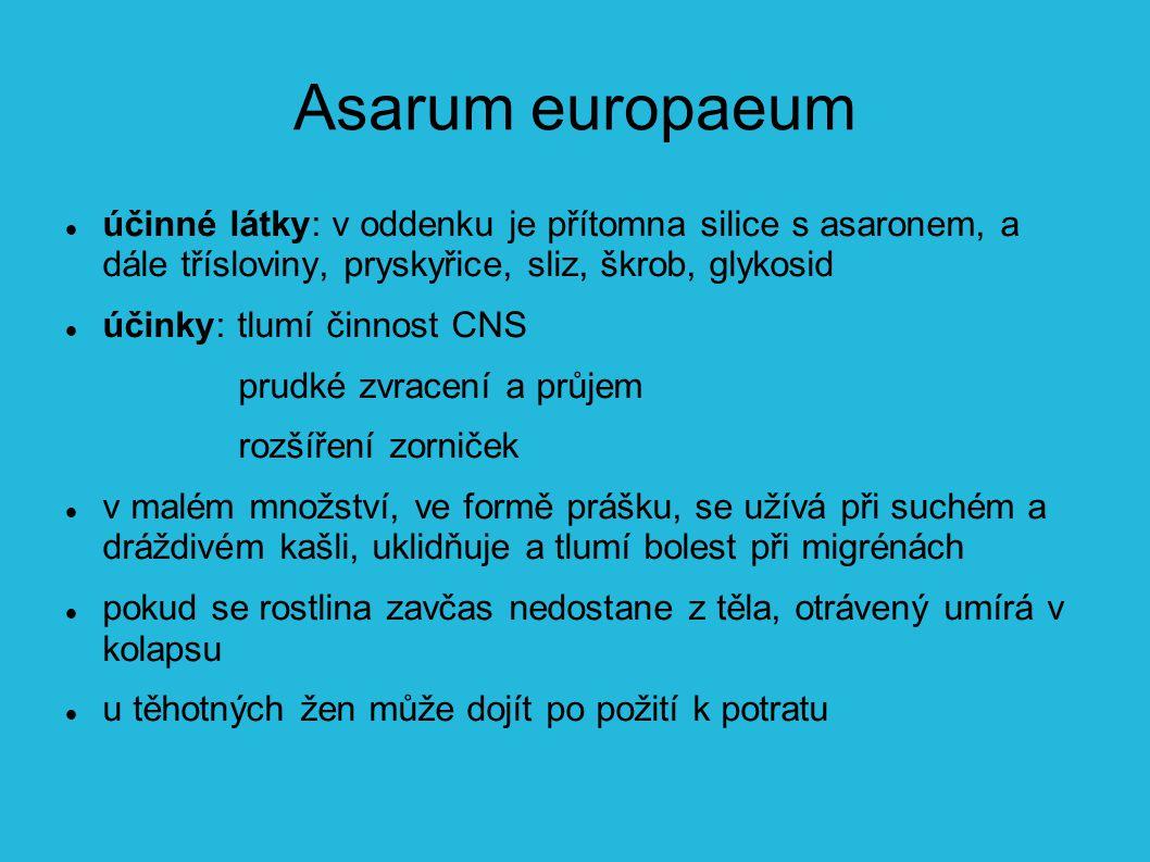 Asarum europaeum účinné látky: v oddenku je přítomna silice s asaronem, a dále třísloviny, pryskyřice, sliz, škrob, glykosid.
