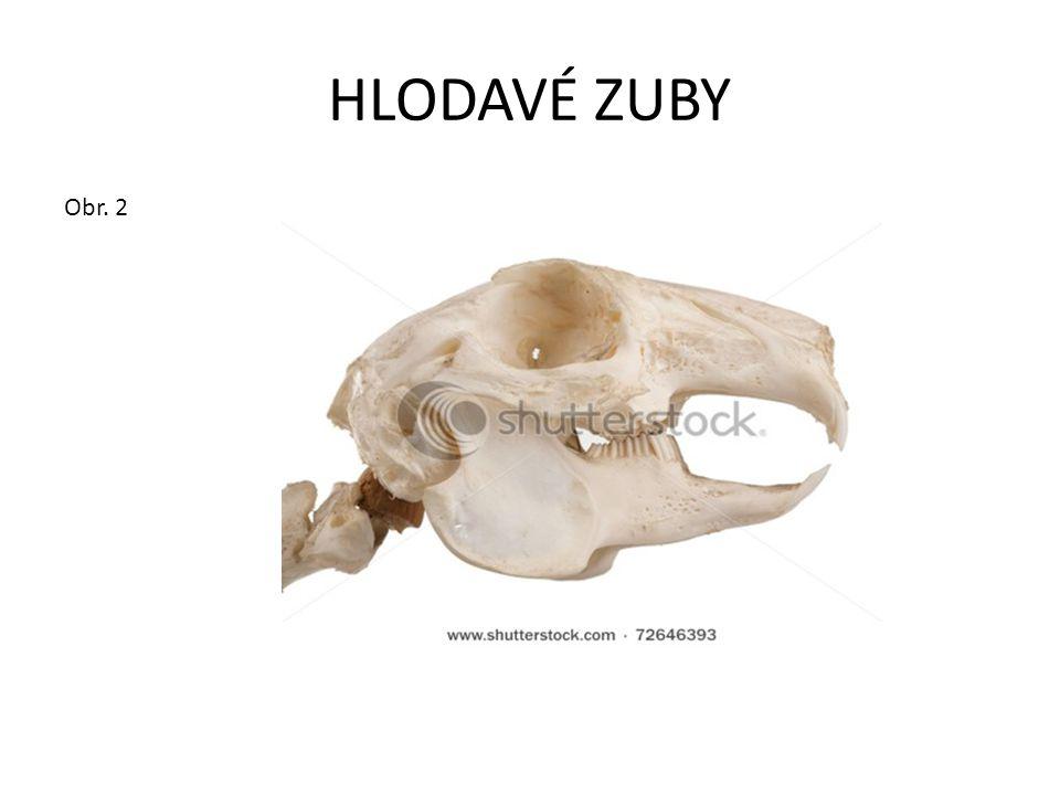 HLODAVÉ ZUBY Obr. 2