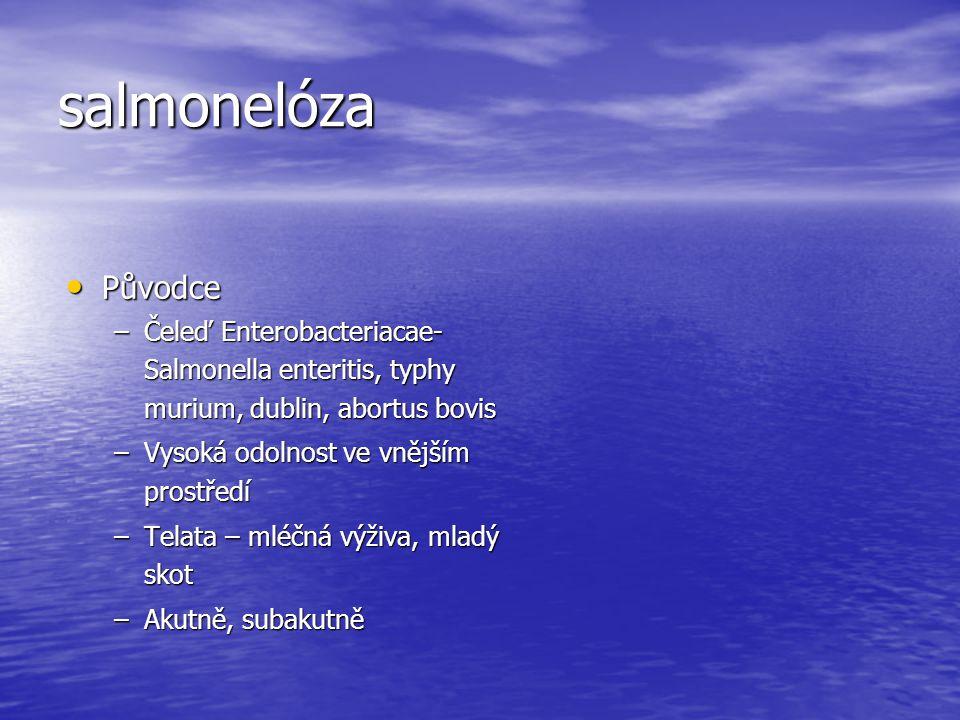 salmonelóza Původce. Čeleď Enterobacteriacae- Salmonella enteritis, typhy murium, dublin, abortus bovis.