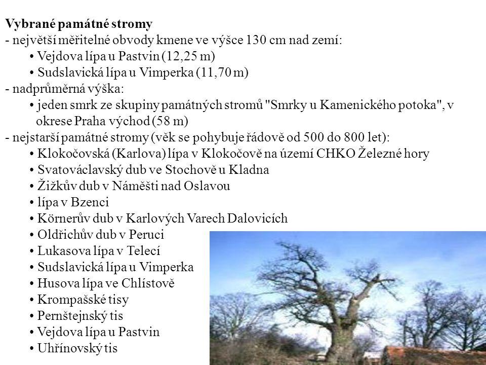 Vybrané památné stromy