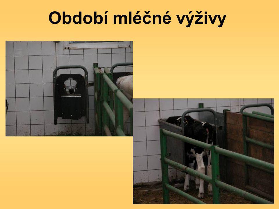Období mléčné výživy
