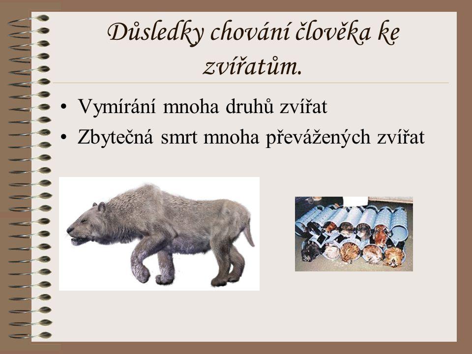 Důsledky chování člověka ke zvířatům.