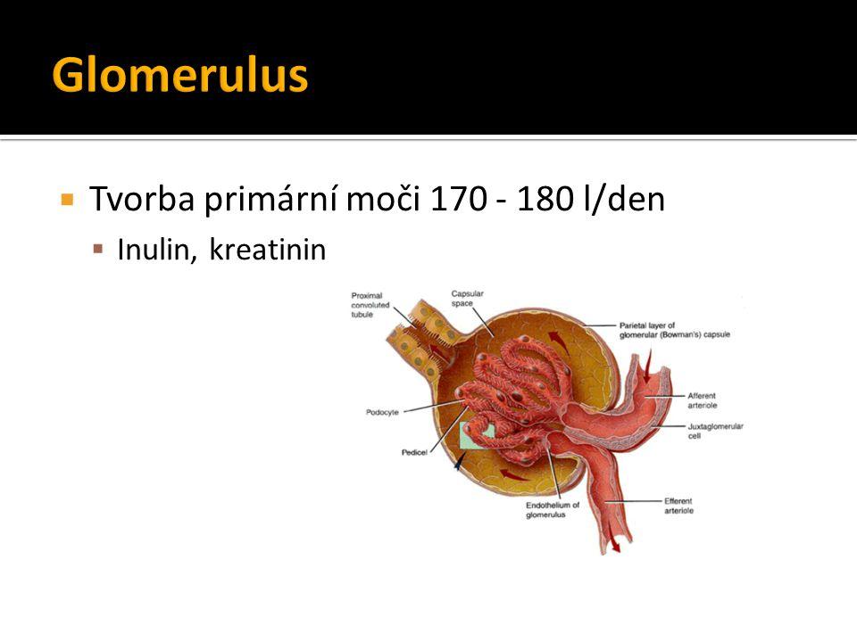Glomerulus Tvorba primární moči 170 - 180 l/den Inulin, kreatinin