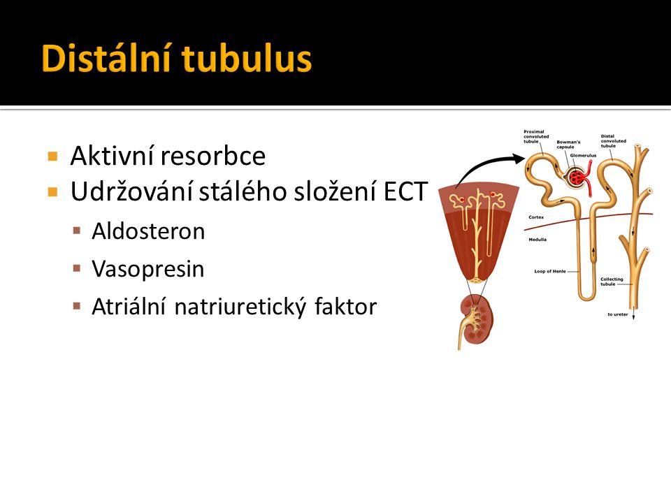 Distální tubulus Aktivní resorbce Udržování stálého složení ECT