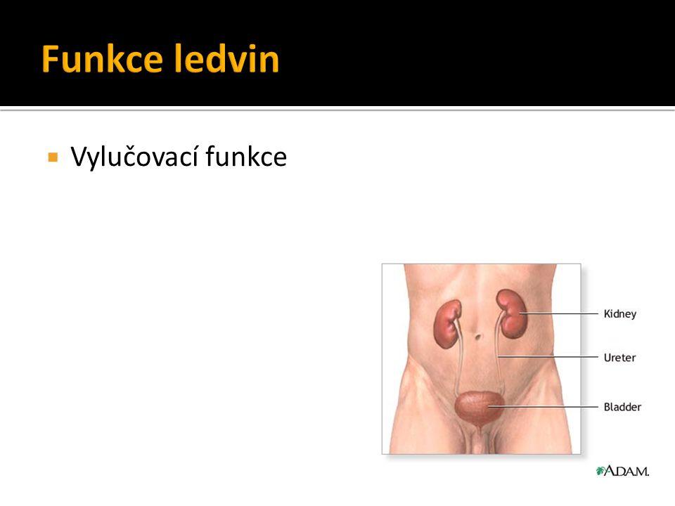 Funkce ledvin Vylučovací funkce