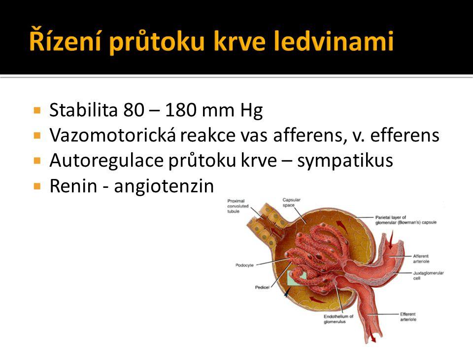 Řízení průtoku krve ledvinami
