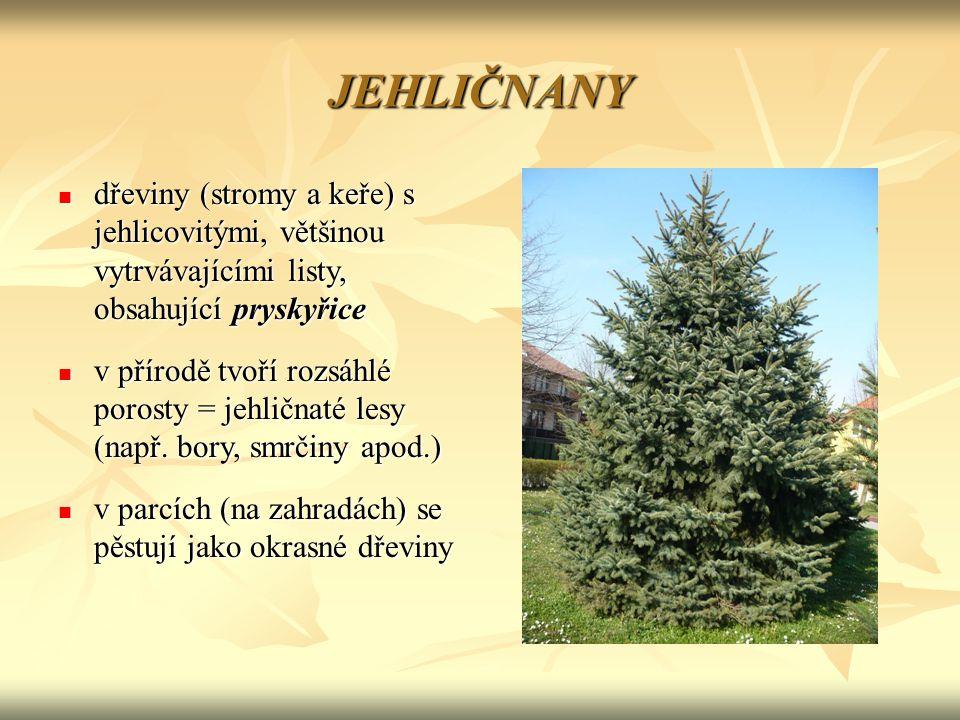 JEHLIČNANY dřeviny (stromy a keře) s jehlicovitými, většinou vytrvávajícími listy, obsahující pryskyřice.